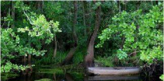 """ЮНЕСКО внесла """"место Эдемского сада"""" во Всемирное наследие"""