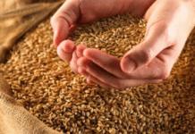 Физики разгадали библейскую загадку о мерах зерна и воздаянии