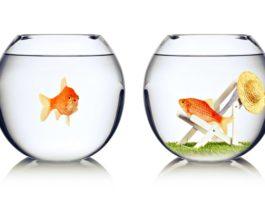 Как увидеть в себе зависть и победить ее?