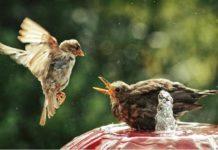 Мощное противоядие Святого Духа от эгоизма
