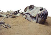 Музейные драконы. Динозавры в Библии и в истории
